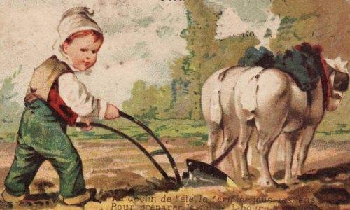 mettre la charrue avant les boeufs  origine  signification proverbe  expression populaire