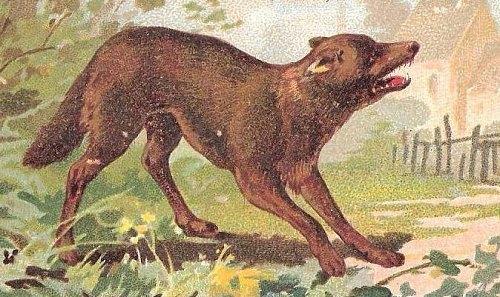 définition de datation faune