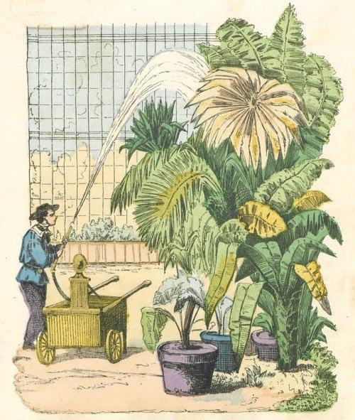Lieux D'histoire. Jardin Des Plantes à Paris, Ouvert Au