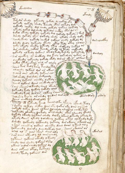 Page du manuscrit de Voynich