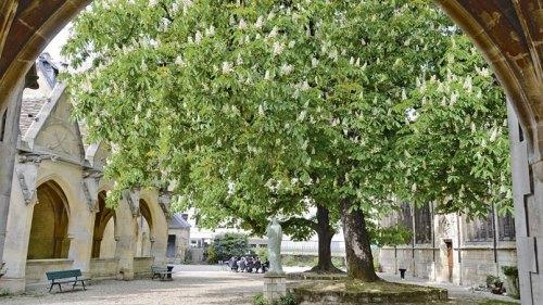 la d couverte des plus beaux arbres d 39 le de france histoire magazine et patrimoine. Black Bedroom Furniture Sets. Home Design Ideas
