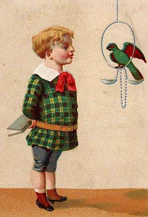Le perroquet écolier