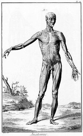 Planche anatomique du XVIIIe siècle tirée de l'Encyclopédie ou Dictionnaire Raisonné des Sciences, des Arts et des Métiers