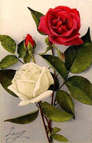 Proverbe Expression Populaire Il N Y A Pas De Si Belle Rose Qui
